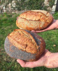 L'Arbre à pain